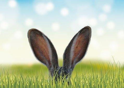 Bunny ears in amongst grass