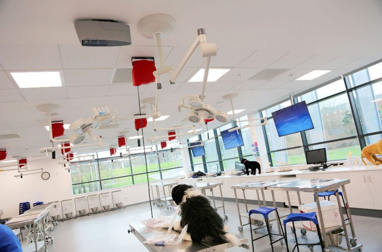 University of Surrey veterinary clinical skills lab equipped for teaching and practice of different procedures and techniques