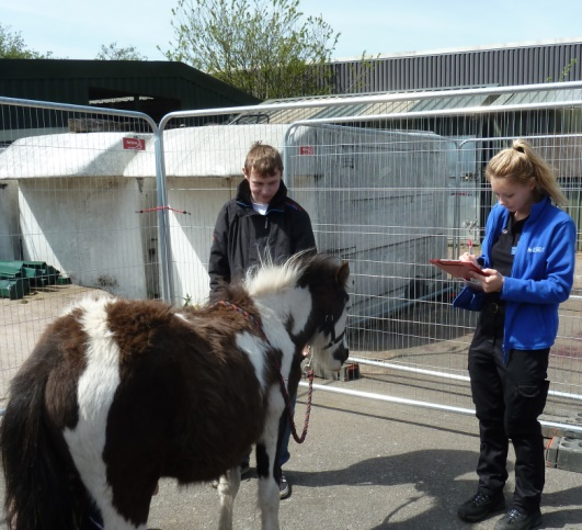 British Horse Society castration clinic report – by Mariella Savage