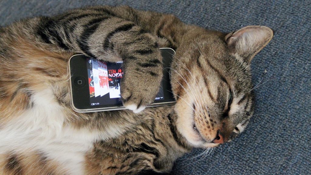 CatCuddlePhone